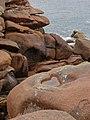 Herz im rosa Granit - Saint-Guirec, Bretagne - 100702 (30541997715).jpg