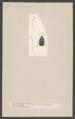 Hispa - Print - Iconographia Zoologica - Special Collections University of Amsterdam - UBAINV0274 001 11 0025.tif