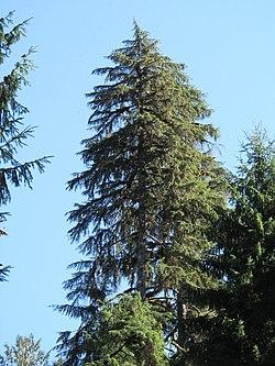 Hoh Rainforest - Olympic National Park - Washington State (9780384324).jpg