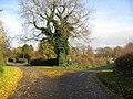 Holbeck Woodhouse - Lane Junction - geograph.org.uk - 1045836.jpg