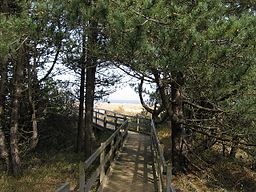 wooden walkway through trees