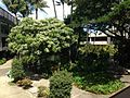 Honolulu International Airport 1 2014-08-16.JPG