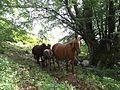 Horses-near-Izdremets.jpg