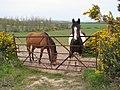 Horses near Bangor - geograph.org.uk - 773376.jpg