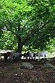Horses under a green sky. - panoramio.jpg