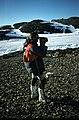 Horseshoe Island Martin Klenke videoing.jpg