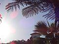 Hotel Coronado Landscape.JPG