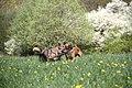 Hunde 2013-05-05-2822.jpg