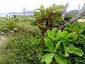 ITAJAÍ (Praia Brava), Santa Catarina, Brasil by Nivaldo Cit Filho - panoramio (16).jpg