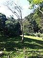 Iguape - SP - panoramio (295).jpg