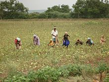History of agriculture in the Indian subcontinent - Wikipedia