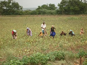 Workers tending crop fields off of the highway...
