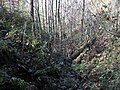 Ison Creek Kimberlite (Elliott County Peridotite, Late Cretaceous, 75 Ma; west of Stephens, Elliott County, Kentucky, USA) 14 (48383092946).jpg