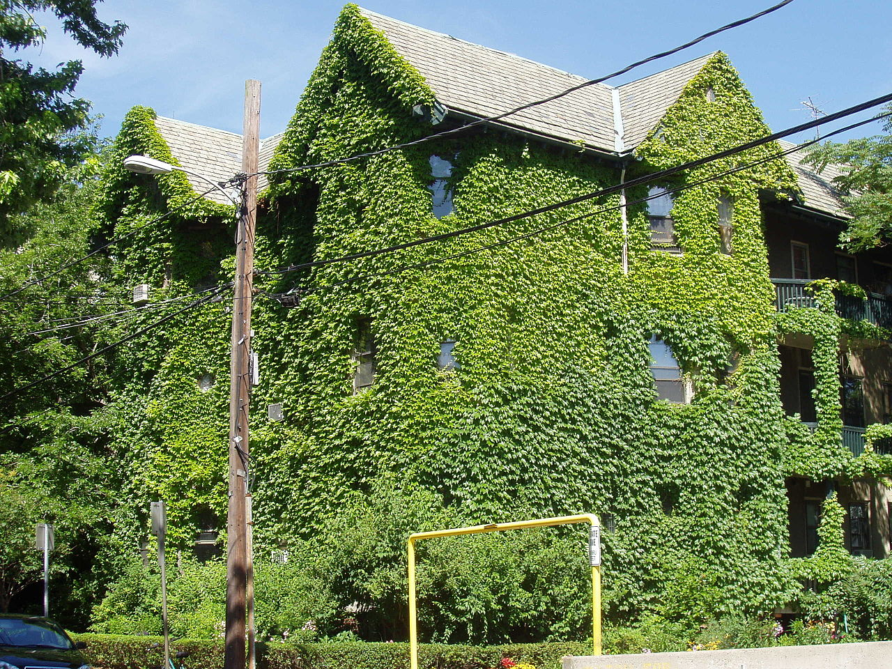 File ivy covered house cambridge massachusetts jpg for The ivy house