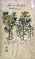 Japanese Herbal, 17th century Wellcome L0030074.jpg
