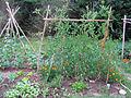 Jardin potager 1.jpg
