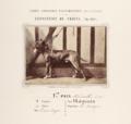 Jardin zoologique d'acclimatation (Bois de Boulogne) Exposition de Chiens Mai 1863 L Crémière phot.png