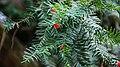 Jardines del conjunto del Generalife 01.JPG