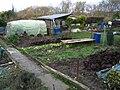 Jardins familiaux versailles1.JPG