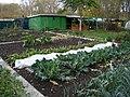 Jardins familiaux versailles3.JPG