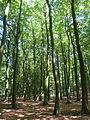 Jasmund Nationalpark - Buchenwald 2.jpg