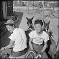 Jerome Relocation Center, Denson, Arkansas. One thing about Arkansas mules - you don't have to keep . . . - NARA - 538832.jpg