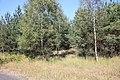 Jesienny spacer - panoramio (6).jpg