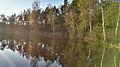 Jezioro Okonko w Pałubicach, brzeg jeziora.jpg