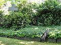 Johannisfriedhof Dresden mit Katze.JPG