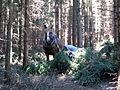 Kůň v lese u obce Věž.jpg