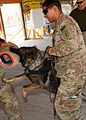 KAF vet clinic holds event to mark World Rabies Day 140927-Z-BQ261-049.jpg