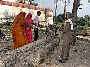 Kal Bhairav temple, Ujjain - Image: Kal Bhairav Ujjain devotees feeding gray langurs