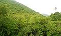 Kambalakonda Sanctuary View1.jpg