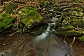 Kamenistý potok, Národná prírodná rezervácia Stužica, Národný park Poloniny (04).jpg