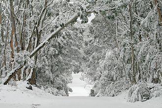 Greater Blue Mountains Area - Image: Kanangra winter wonderland
