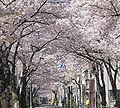 Kankanmori Street in Higashi Nippori 2-Chome Arakawa-ku, Tokyo, Japan.jpg