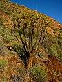 Karas Region, Namibia - panoramio (19).jpg