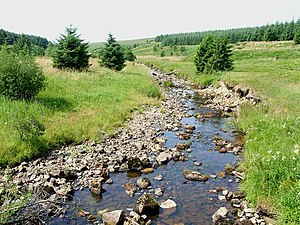 Kershope Burn - The burn near Scotch Kershope