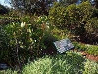 Kirstenbosch National Botanical Garden by ArmAg (11).jpg