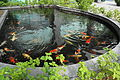 Koi Pond in MUST.JPG