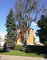 Kolegiata Nawiedzenia NMP i św. Michała Archanioła - 10 20120930208.jpg