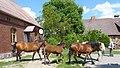 Konie i my z prawej mój brat Włodzimierz. - panoramio.jpg