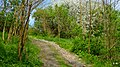 Koronowo - Promenady - panoramio.jpg