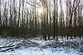 Koude dag met zon en sneeuw mallebos.jpg