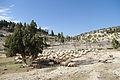 Koyun sürüsü - Sheep flock.jpg