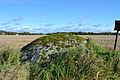 Kultusekivi, Pirgu küla, Sillaotsa talu 11917.jpg