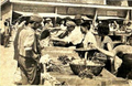 Kumanovo farmers market 1962.png