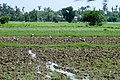 Kyaukse, Myanmar (Burma) - panoramio (13).jpg