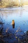 LSG H 00070 Calenberger Leinetal - Teich an der Calenburg (15).jpg