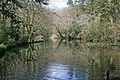 Lake in Wayford Wood (geograph 3332354).jpg